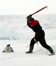 matanca-de-foca.jpg