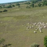Pecuária será mantida no Pantanal