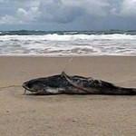 Peixes aparecem mortos na praia de Enseada dos Corais