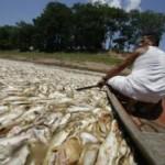 Seca causa morte de milhares de peixes em Manaquiri