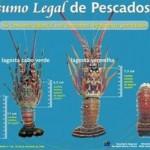 defeso da lagosta