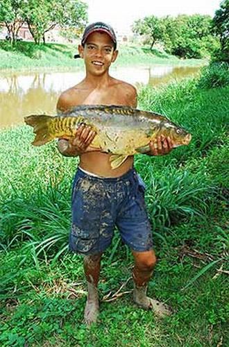 Adolescente pesca carpa de 6 quilos no rio sorocaba for Carpa de rio