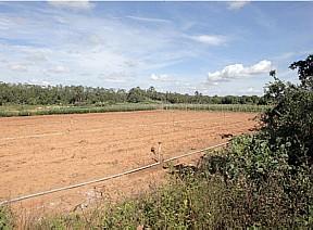 Terreno em Planaltina: em vez de tanques com tilápias, uma plantação de mandioca - André Dusek/AE