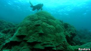Grande Barreira de Corais, na Austrália (Foto: Reuters)