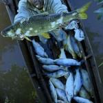 Registro Geral de Pesca