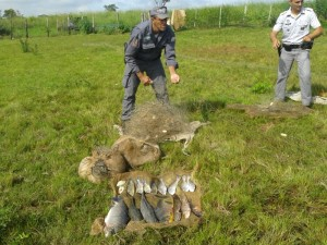 Pesca ilegal em Irapuã
