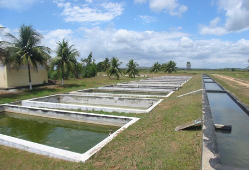 Produ o de til pia no brasil guia da pesca for Como hacer un estanque para criadero de tilapia